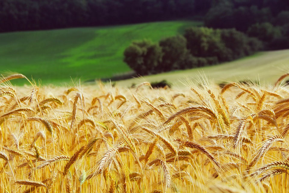 Getreide-Tagung: Quo vadis Weizen?
