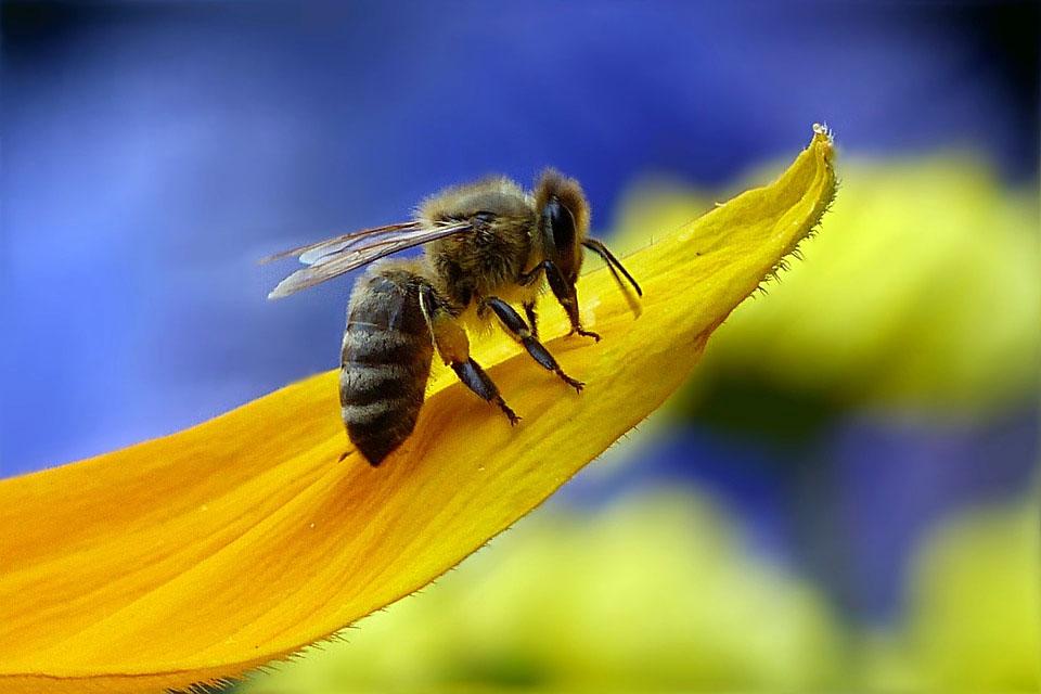 «BienABest»: stellt Wildbienen in den Fokus