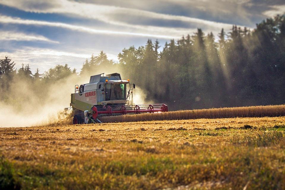 Ernte 2017: Ertragspotenziale durch Wetterextreme verringert