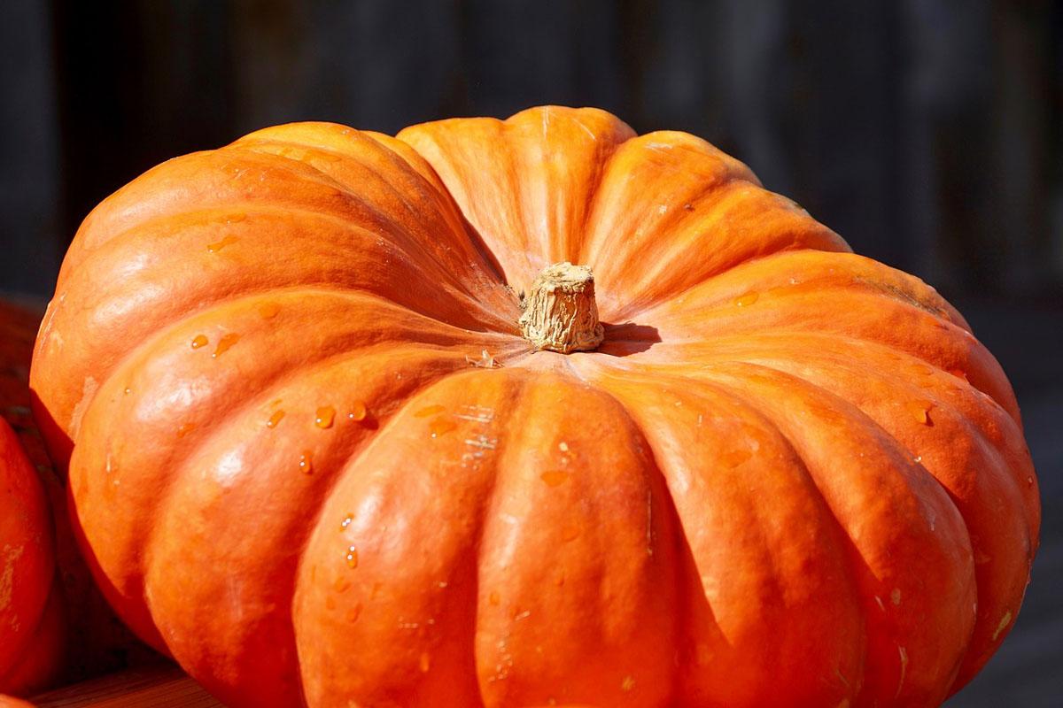 Nicht nur zu Halloween: Speisekürbisse boomen
