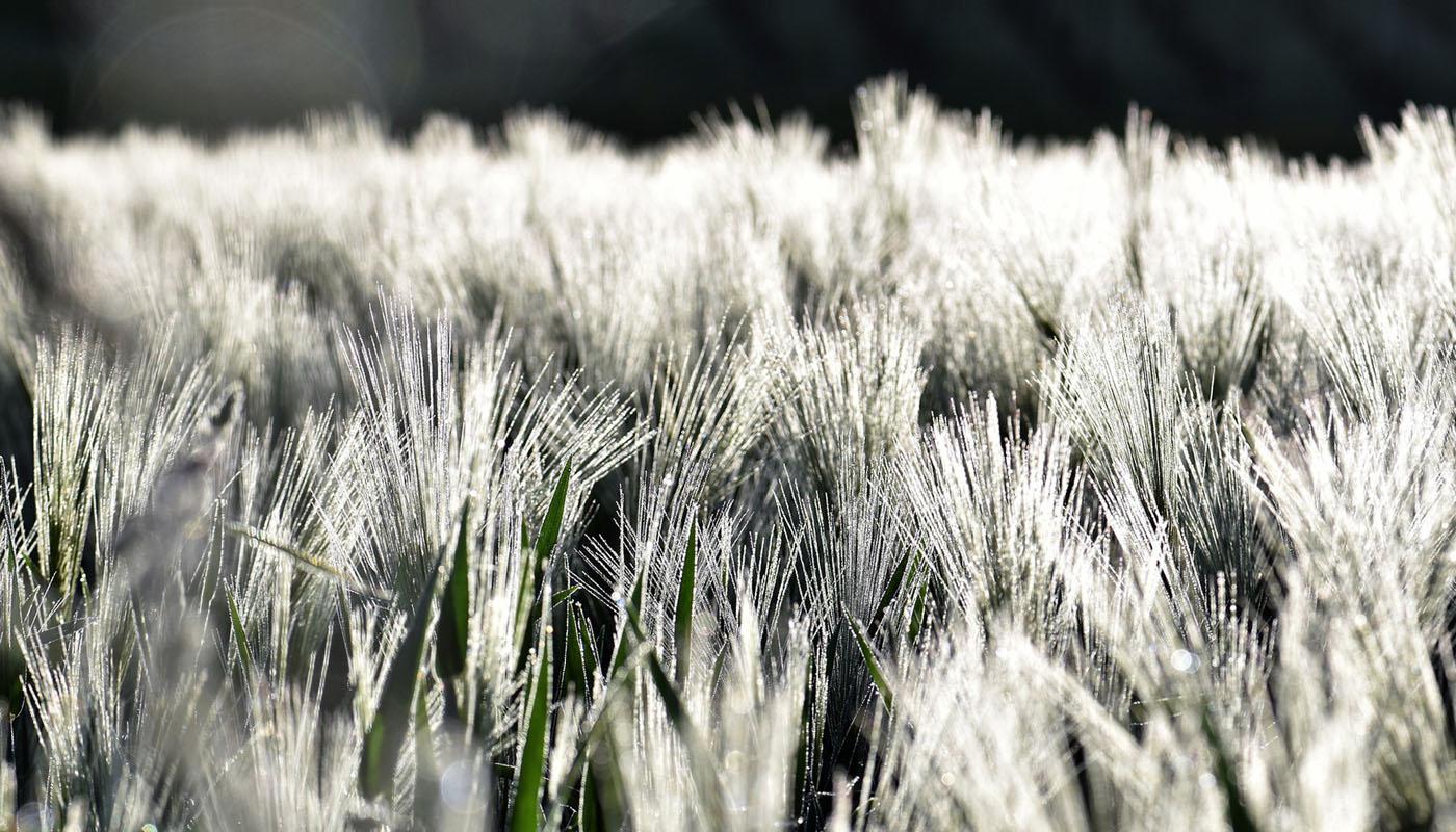 VDB Berlin-Brandenburg: berichtet über Ernte 2020 via Webinar