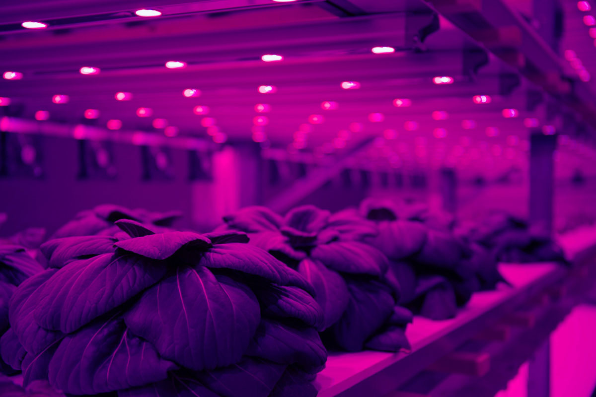 Schweiz: Europas größte vertikale Farm entsteht mitten in Basel