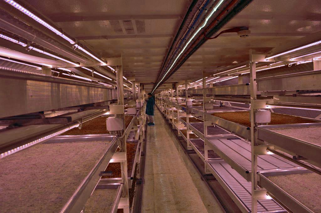 Vertikal Farming: Ernährungssicherung durch Inhouse-Tomaten?