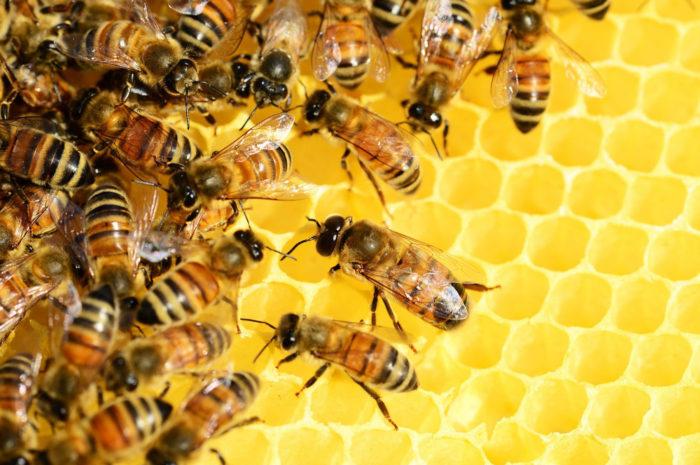 Honigernte: Klimaveränderungen auch in der Imkerei spürbar