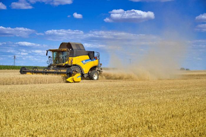 Getreideernte 2021: mehr Masse als Klasse