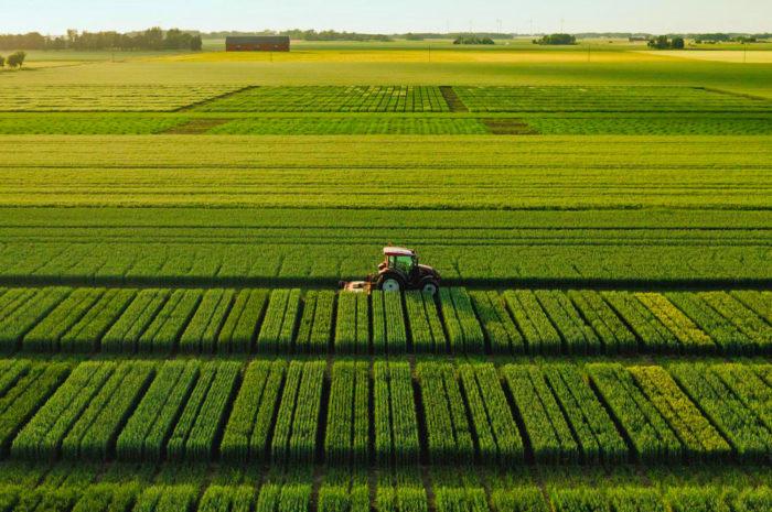 Paulig und Lantmännen kooperieren für nachhaltige Landwirtschaft